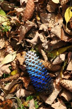 Blue_cone72