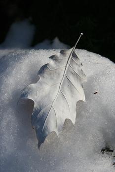 White_leaf72