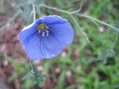 Blue__2_