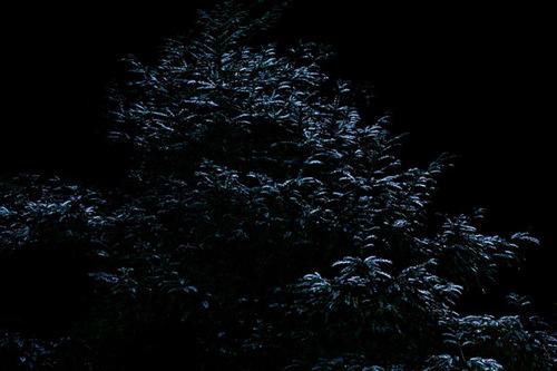 03_cytoplasm_of_the_tree
