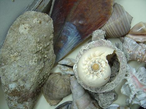 Shell_1