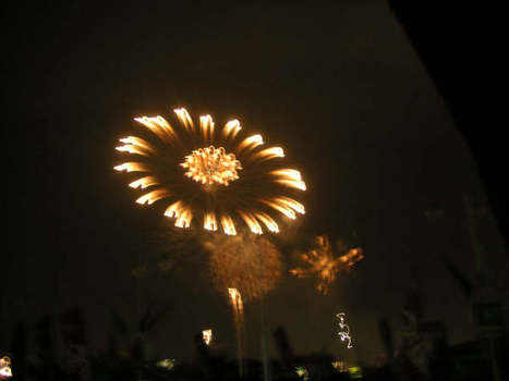 Cherryblossom_fireworks