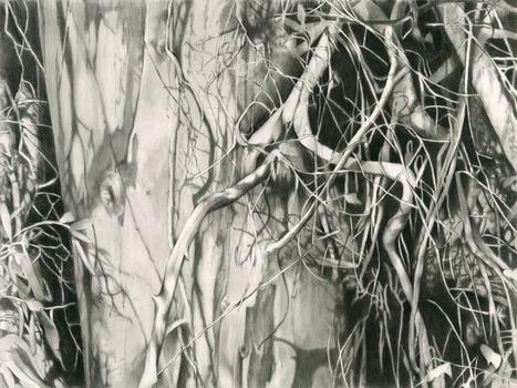 Eucalyptus_web