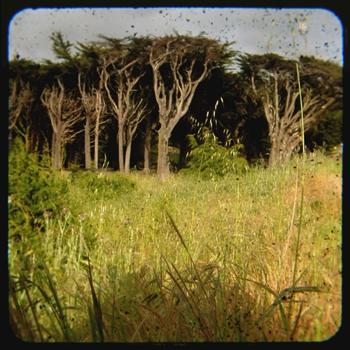 Cypresstreesandgrass