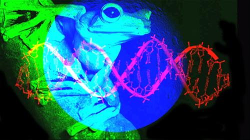 Planet_frog_dna_10