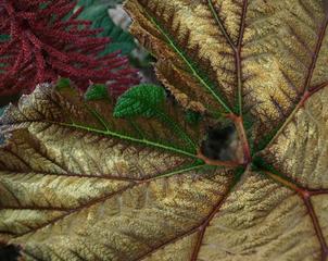 Viridian_leaf_with_a_window