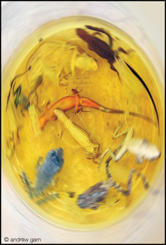 Frog_lizard_soup_5-27_22