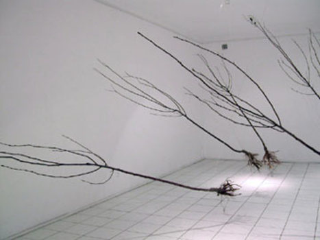 Orchardblow_2_installation