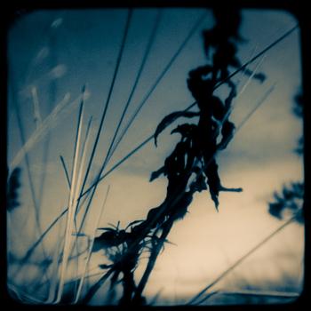 Sandy_hook_reeds