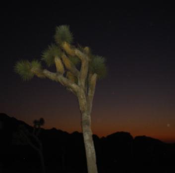 Tree_box_copy
