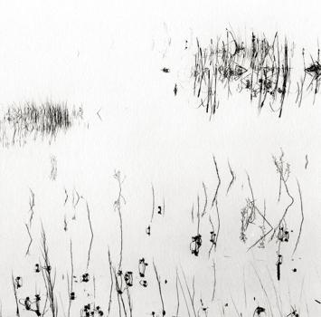 Reeds_san_luis_res