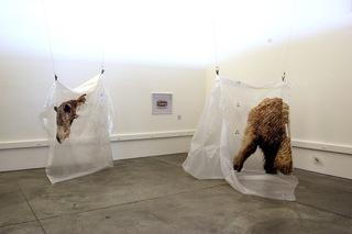 Escottalicia_bears_hi_sm