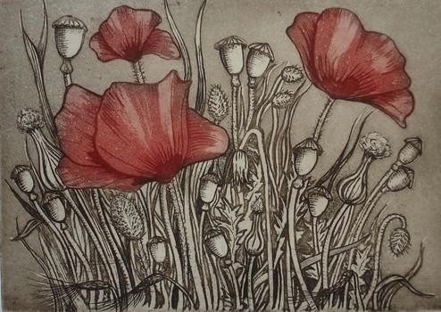 _poppies__etching___aquatint