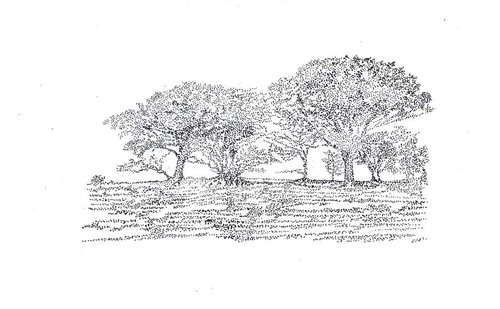 Trees_i_2008_david_harker_catalogue_landscape