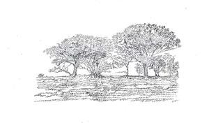 Trees_i_2008_david_harker_catalogue_landscape