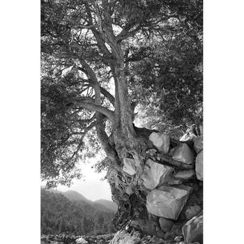 Tree-holding-rocks_7002