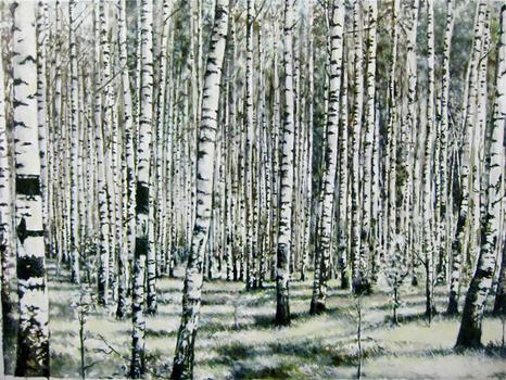 Birches_sm