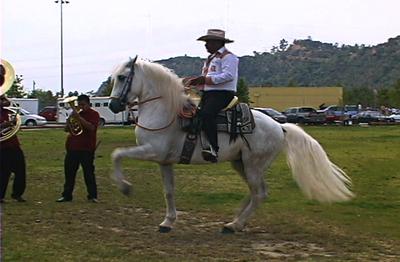 White_horse_cowboy