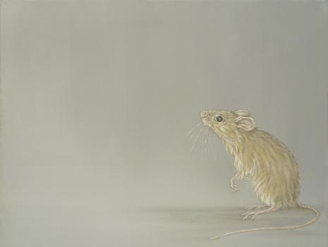 Bella_mouse