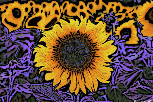 Sunflowers_copy