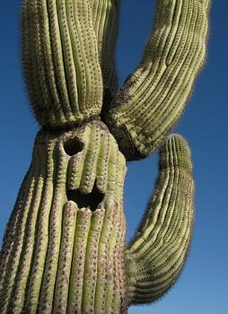 Howdy_cactus3
