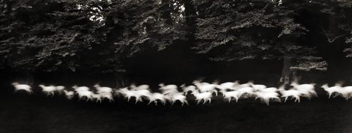 Caponigro_running_deer