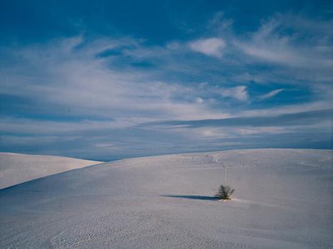Desert___plant