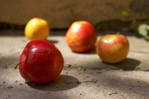 Apples_-_petr_nikl