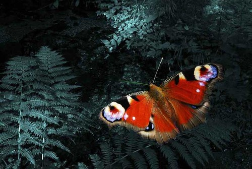 Butterfly_-_petr_nikl