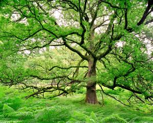 Awtree01