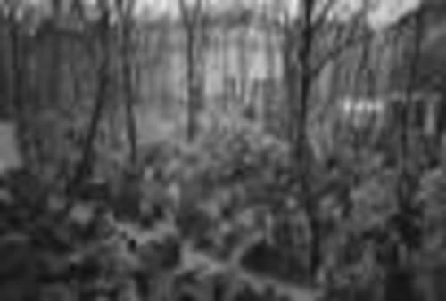 Angela_g_jewish_cemetery_prag_2004_rdax_70