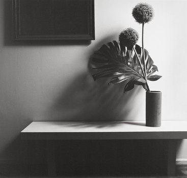 Robert_mapplethorpe_-_flower_-_collectie_epfap