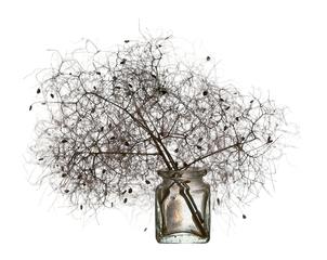 Joanne_koltnow-smoke_tree