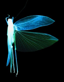 Grasshopperhalf72