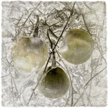20110208140908-gourds