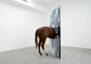 Gray_horse_