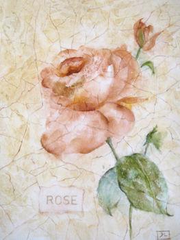 Antique_rose_555k