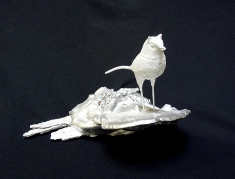 Catbird_72