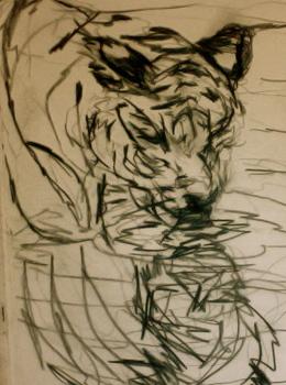 Tigerstudies-_graphite