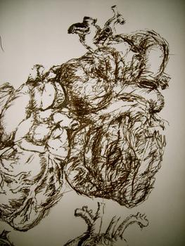 Anatomical_heart_studies3