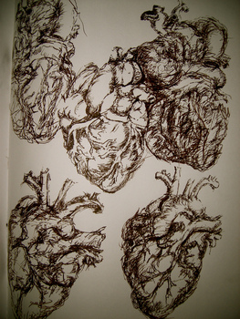Anatomical_heart_studies1
