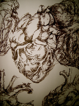 Anatomical_heart_studies2