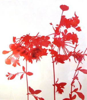 Jameswelling_flowerseries_red_2004_edition_1of5_cprint_33x26inches