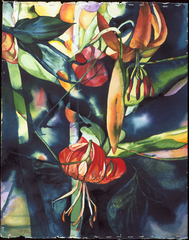 Wood_lily