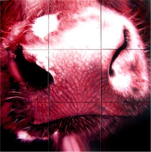 Redsnout