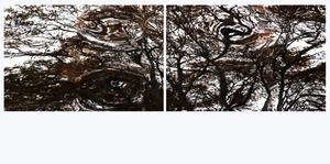 Liquid_trees_diptych_033_sample