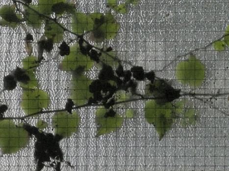Leaf_drawing__13-1