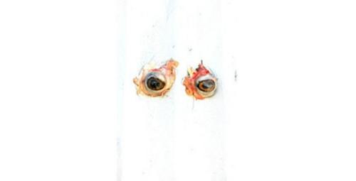 Eyes42
