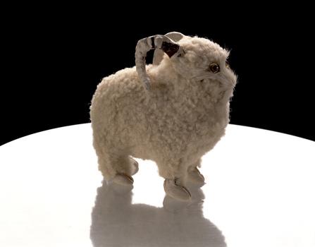 Sheep_cboyd_webb_2010