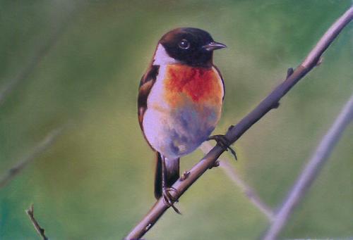 Bird_new